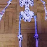 Skelette_Biologie_5