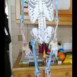 Skelette_Biologie_6